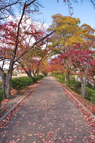 【写真】2012 紅葉 : 長岡天満宮/2020-10-09/IMGP6554