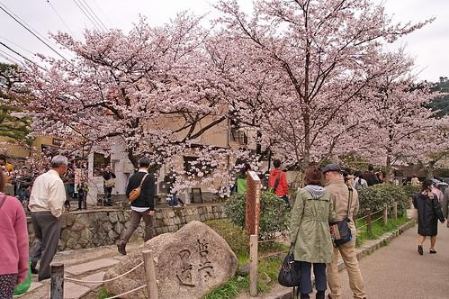 【写真】2013 桜 : 哲学の道/2018-12-24/IMGP9245