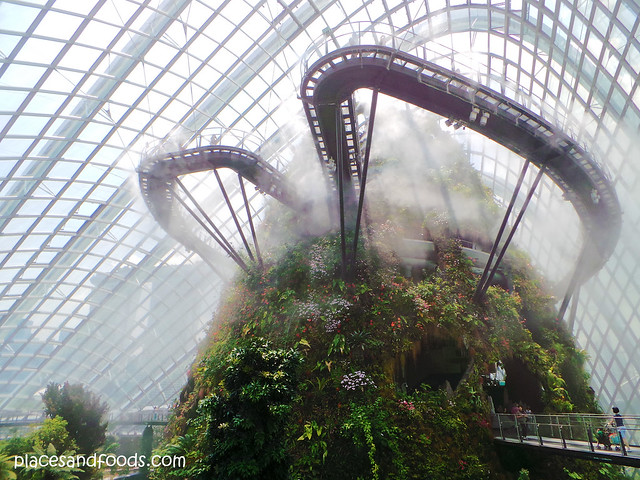 cloud forest misty overview