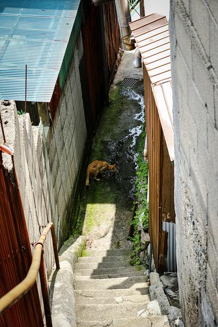 Onomichi Cat #001