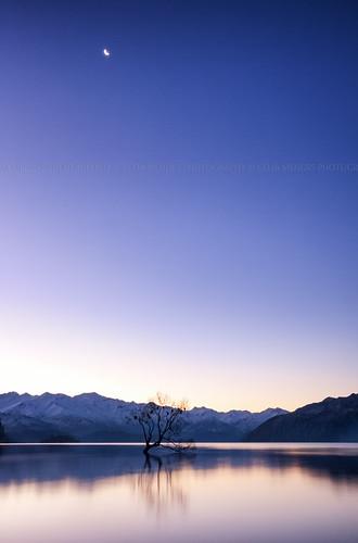 blue trees sunset newzealand sky moon snow mountains azul landscape árboles nieve lakes silhouettes bluesky paisaje paisagem céu luna lagos pôrdosol cielo neve lua siluetas montanhas clearsky montañas árvores novazelândia longaexposição puestadelsol nuevazelanda longexposures céuazul silhuetas largaexposición 2013 céulimpo