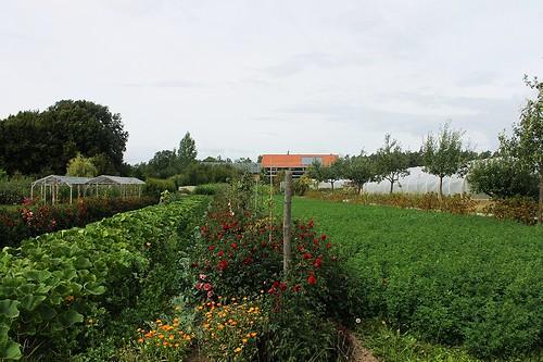 Bioanbau