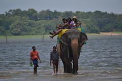 Elephant & Culture Show, And Jumbo Ride