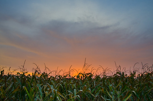 sunset sky corn cornfield day cloudy farm indiana monroe lightroom sunsetday