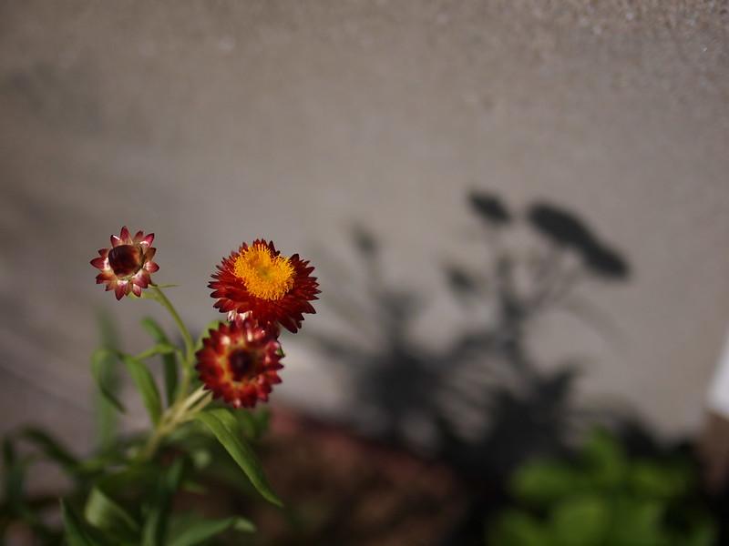 Flower in Kobe, 神戸の花