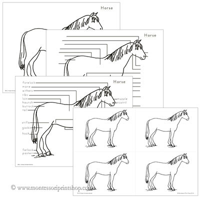 Elementary Horse Nomenclature from Montessori Print Shop