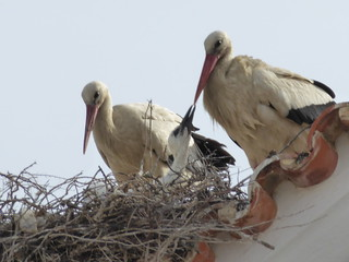 Baby stork! Baby stork!
