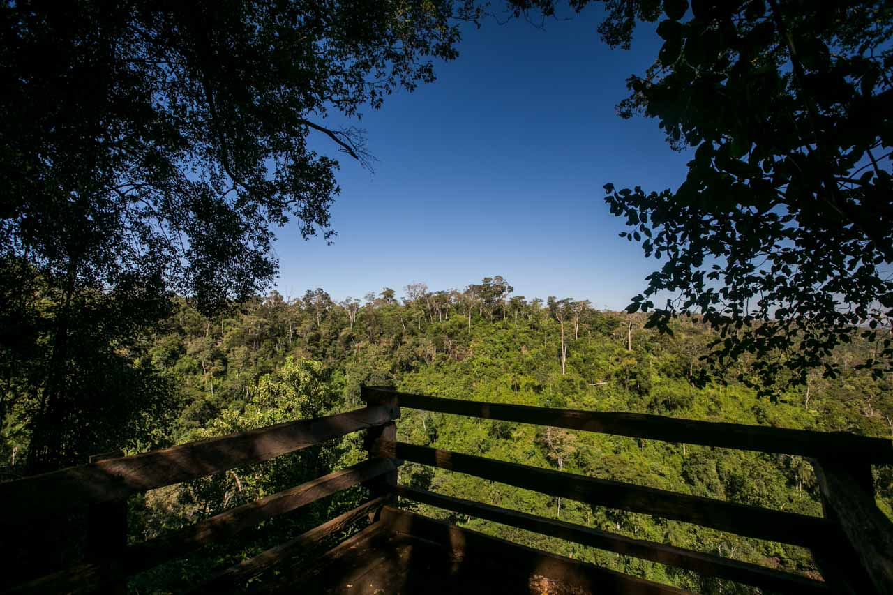 Una abertura en medio del bosque en uno de los senderos que conduce al Salto Karapá (Tetsu Espósito)