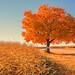 L'arbre de notre enfance by demersyvan