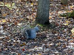 Mill Pond Park -- Autumn (89)