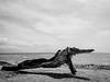 Gulugod baboy + Portales Island-4