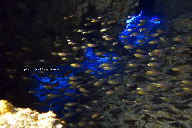 中にはキンメモドキやスカシテンジクダイの幼魚ちゃん達がいっぱい♪