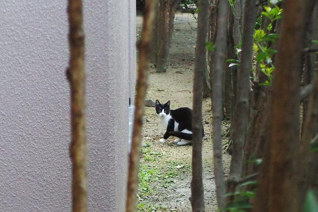 Today's Cat@2016-11-10