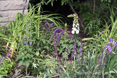 garden_blooms_1