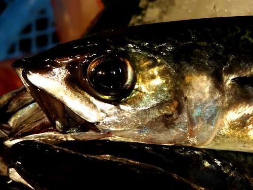 鹹魚幾乎已經成為鯖魚的別名