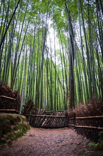 Bamboo grove at Arashiyama Kyoto by hyossie