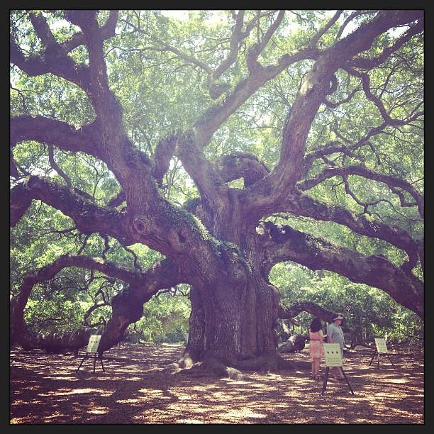 Hello, ancient tree. #brothersisteradventure