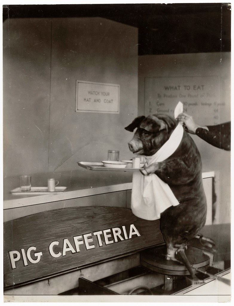 Early 20th Century Pig Cafeteria
