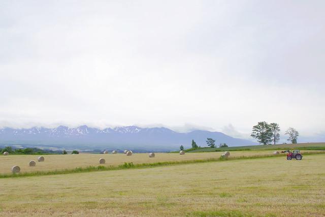 牧草ロールのある風景2
