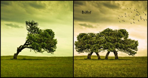 Dragon Tree BEFORE & AFTER