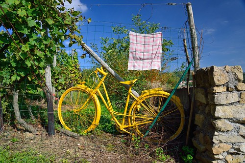 Yellow bike in vineyard by kewl
