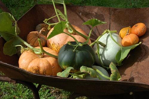 pumpkins 2013