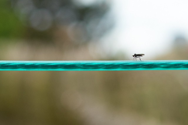 Fly Walk