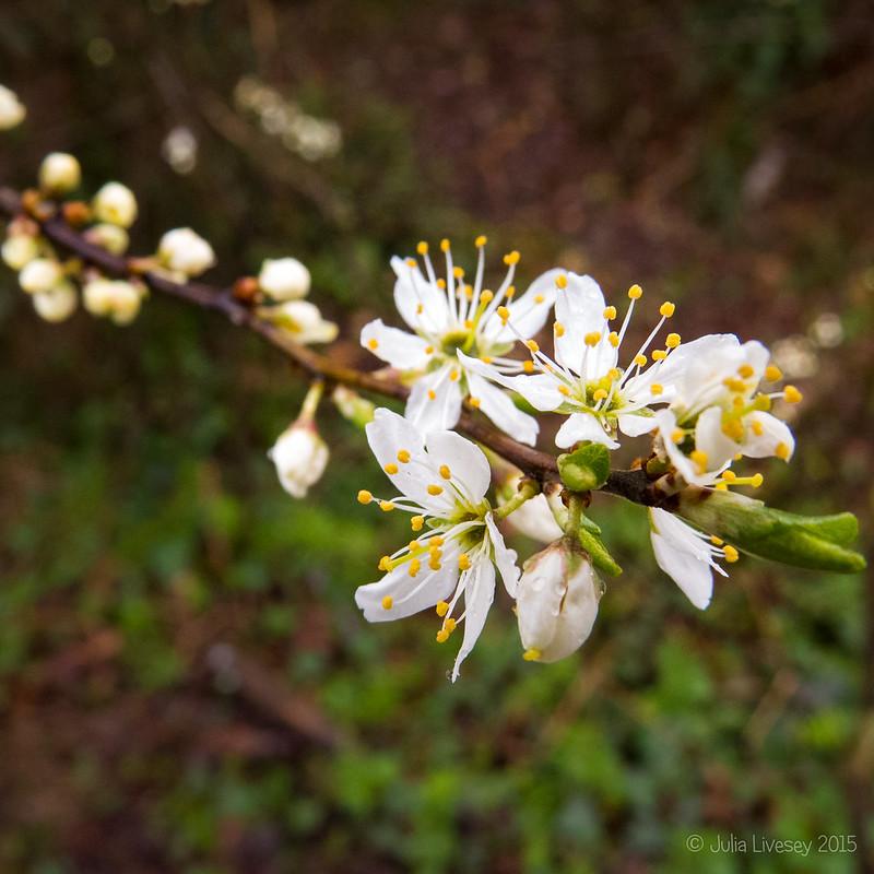 Blosson at last