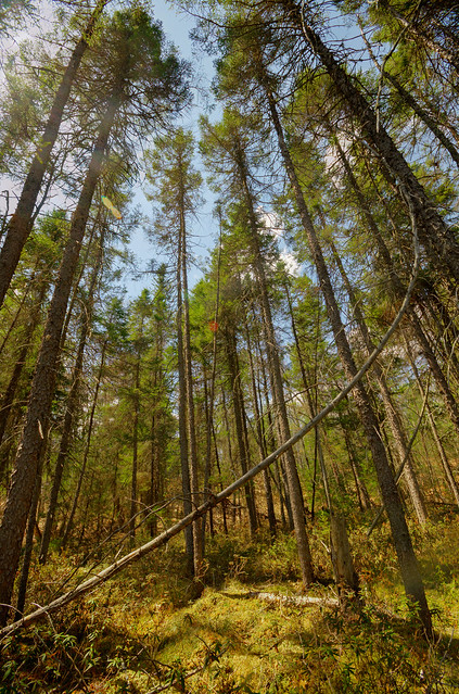 Big Swamp State Natural Area