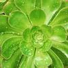 #succulent #patterns #botanics #wellington