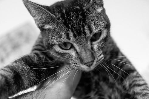 Gato busca hogar