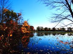 Mill Pond Park -- Autumn (73)