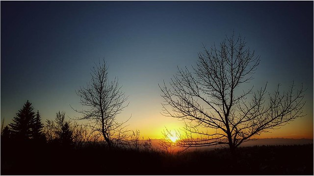We are not here to curse the darkness, but to light a candle that can guide us through the darkness to a safe and sure future. For the world is changing ... -- John F. Kennedy #shortdays #4oclocksunset #calgarysunset #loveyyc #yycsunset #sunset #trees #w