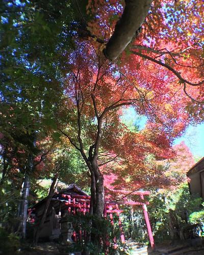 紅葉 #🍁 #⛩ #autumnleaves #wideangle #olloclip