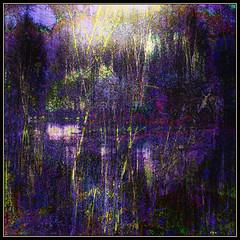 Purple Night Pond
