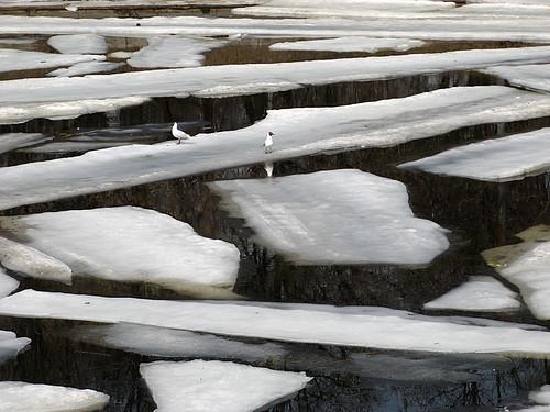 14.04.2012 Лёд на отводном канале