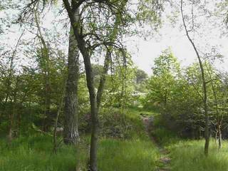 En un claro del bosque de Valorio. Explore May 11, 2012 #209