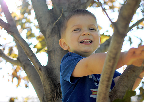 Toddler in a Tree 1