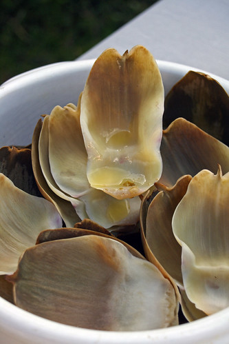 Artichauts de Bretagne