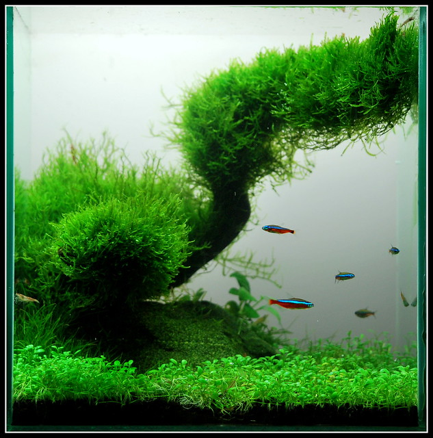 Aquascape - a gallery on Flickr