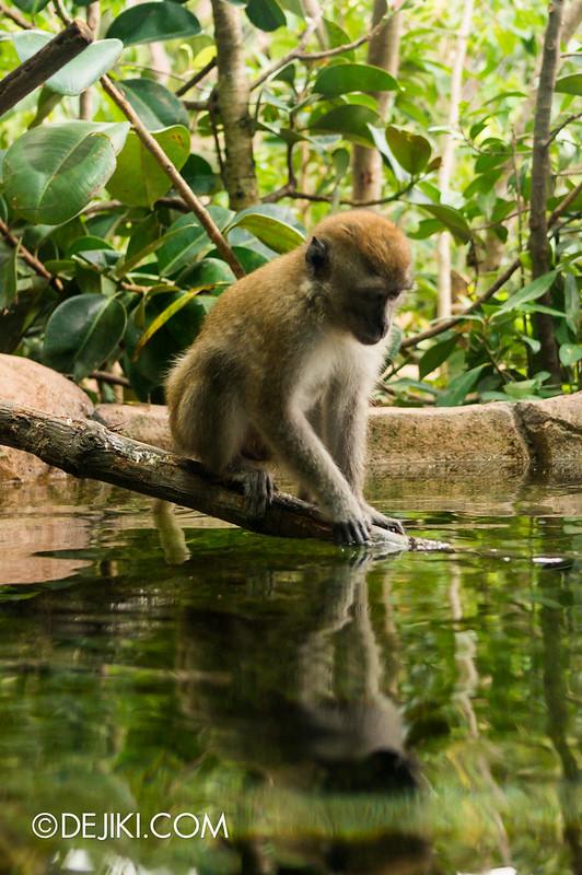 River Safari - Mekong River / Crab-eating Macaque
