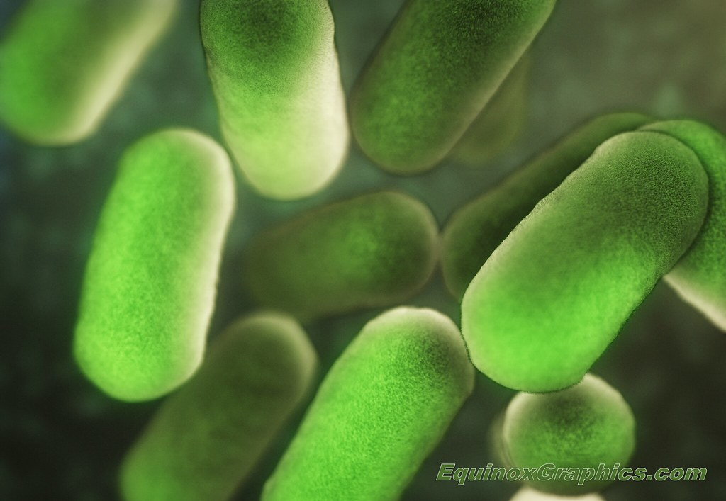 Image:Bacteria suspension