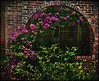 Heights Brick Arch Flowers ARTsy by oldusephemera