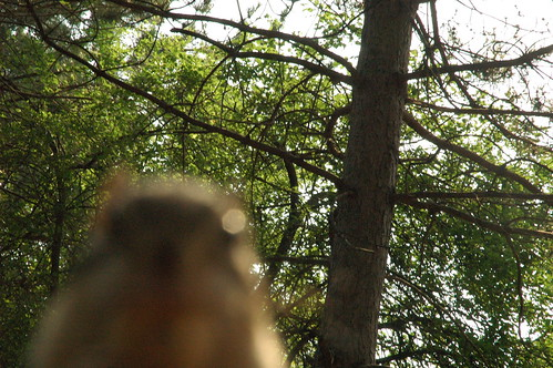 Chipmunk photobomb