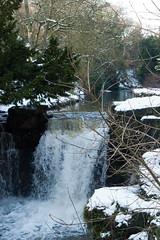 Winter 2013 (Jesmond Dene)  (2)