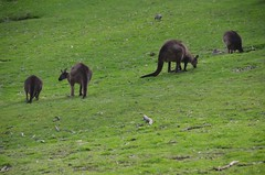 Seeing the natural bush of Cleland Conservation Park - Things to do in Adelaide