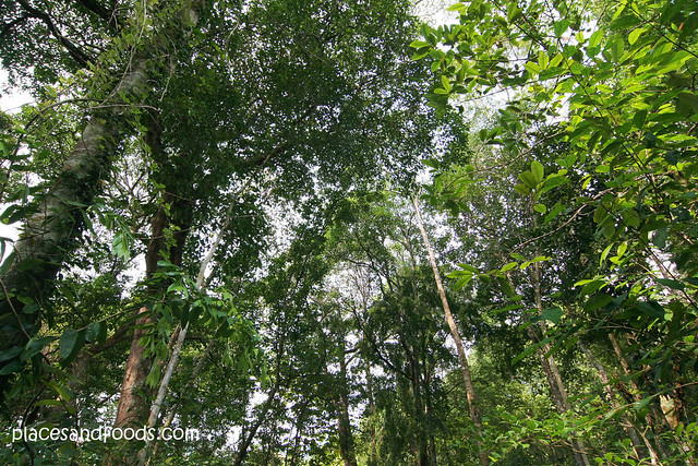 permai rainforest