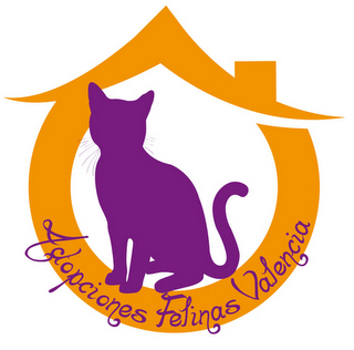 Morris, gatito blanquipardo muy guapo y activo nacido en Octubre´18, en adopción. Valencia. ADOPTADO. 9419287501_dac76d5337_o
