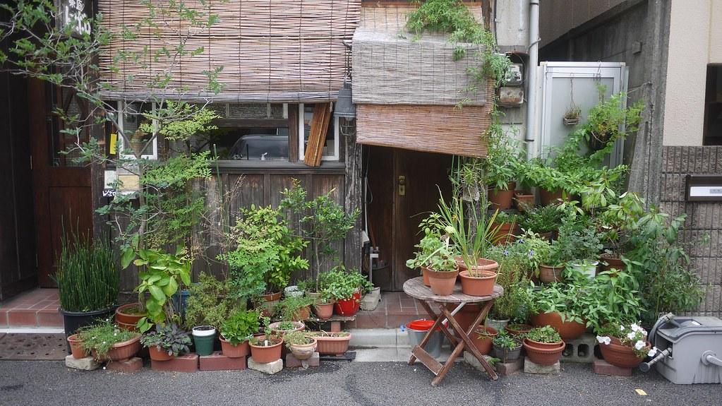 Pretty Pot Plants