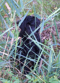 Izzy hiding in the grass
